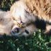 Thumbnail for Springtime Garden Dangers for your Pet